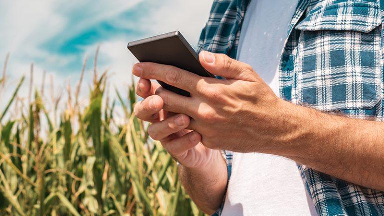 Produtores rurais inovam ao usar o delivery para entregar hortaliças