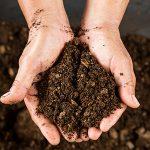 Adubação do solo e o papel dos fertilizantes na produtividade agrícola