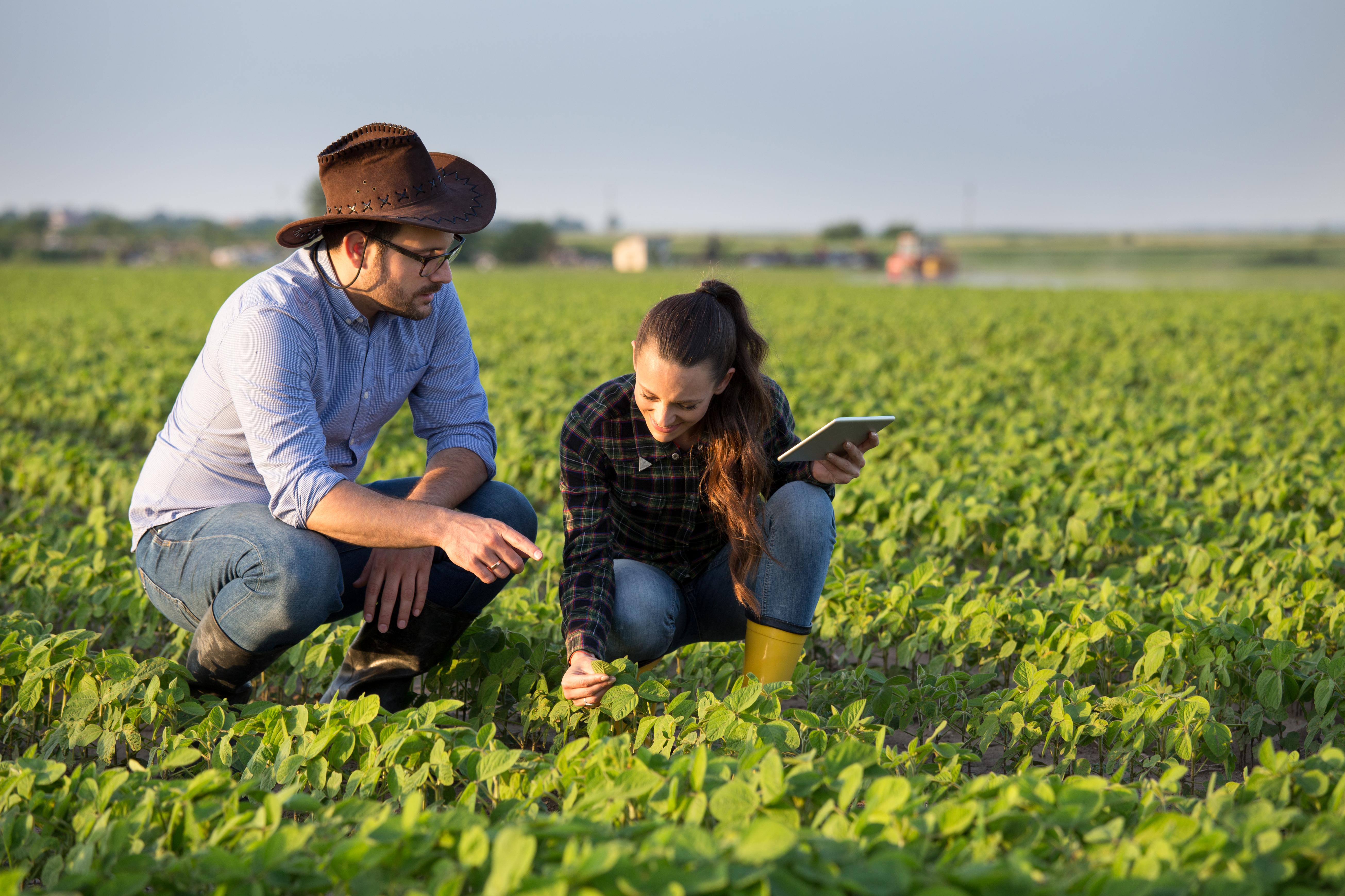 Nova geração da agricultura familiar encara dificuldades para continuar missão dos pais